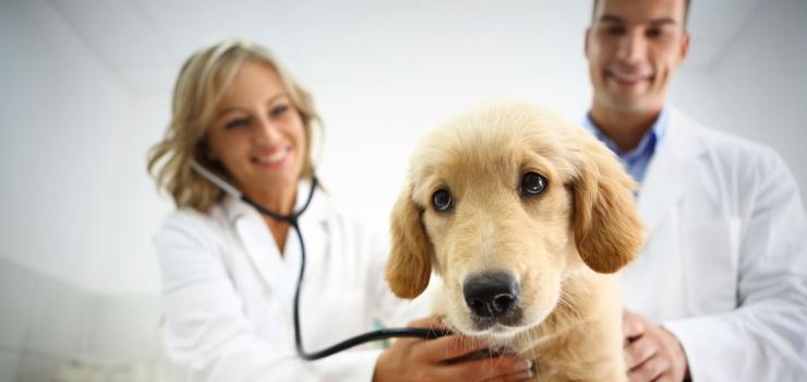 Veterinary Technician with dog